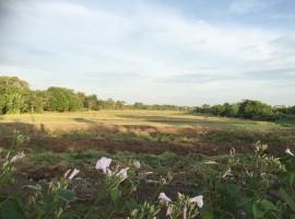ขายที่ดินเปล่า 49-0-128 ไร่ ถมแล้วแปลงสวย เขตมีนบุรี 05116